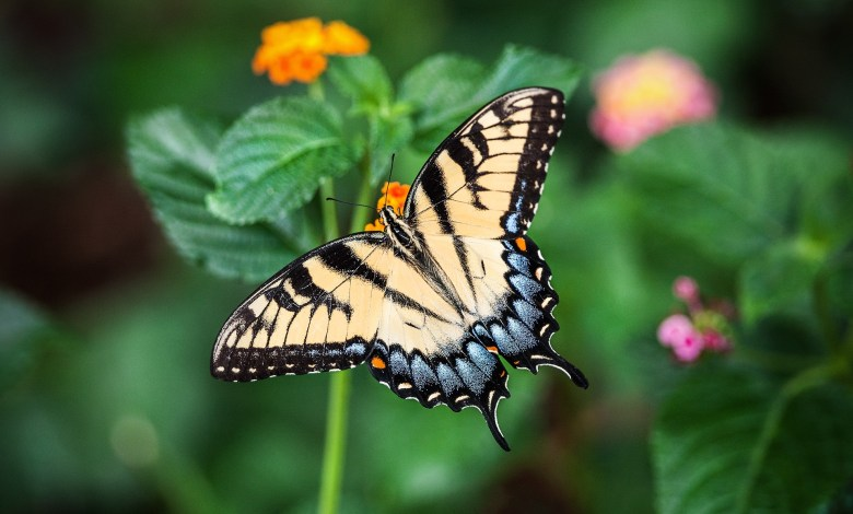 Photo of How to Make a Butterfly Garden