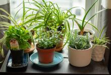 Photo of How to Grow an Indoor Herb Garden