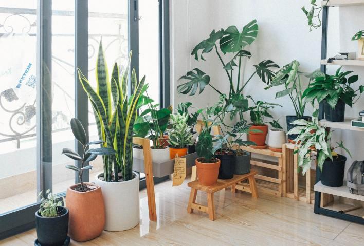 Growing Plants Indoor