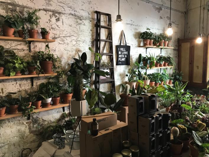 Proper lighting for growing plants