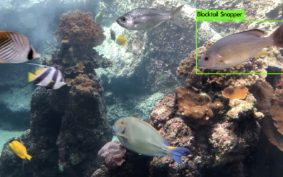 Intern Update: Kylyn takes on machine learning for fish ID