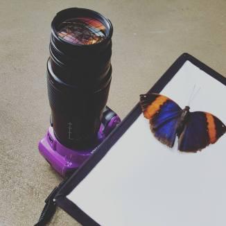 purple pentax