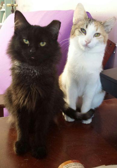 Fifi and Alfalfa