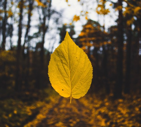 Purpose: Leaf - Purpose Driven Mastery