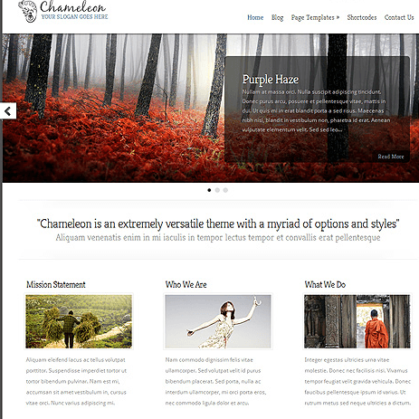 Chameleon - Highly secure Business WordPress theme