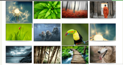 Flexible theme showing image galleries