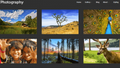 Photography- Gallery page with grid view in landscape orientation