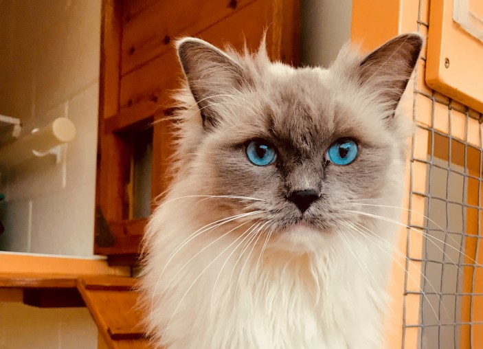 Our gorgeous Blue