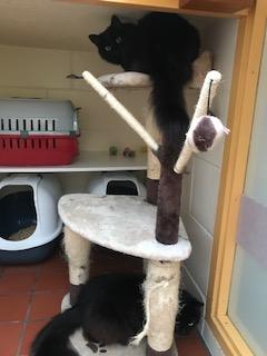 Nova and Luna on their cat tree