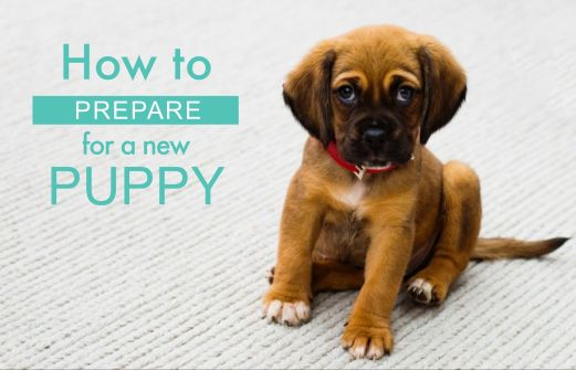 How to prepare for a new puppy 1