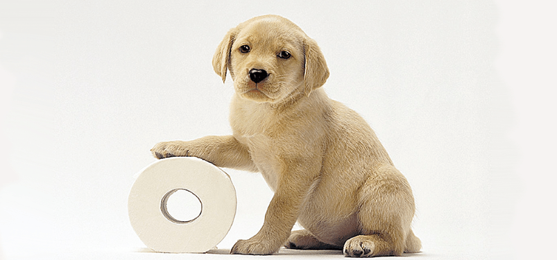 puppy+toilet+roll.png