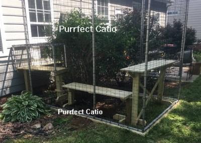 Catio1