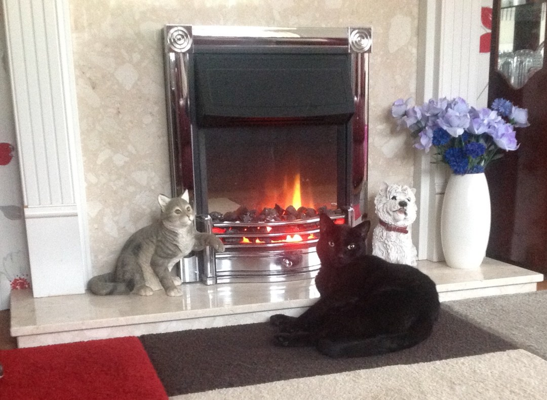 cat_fireplace