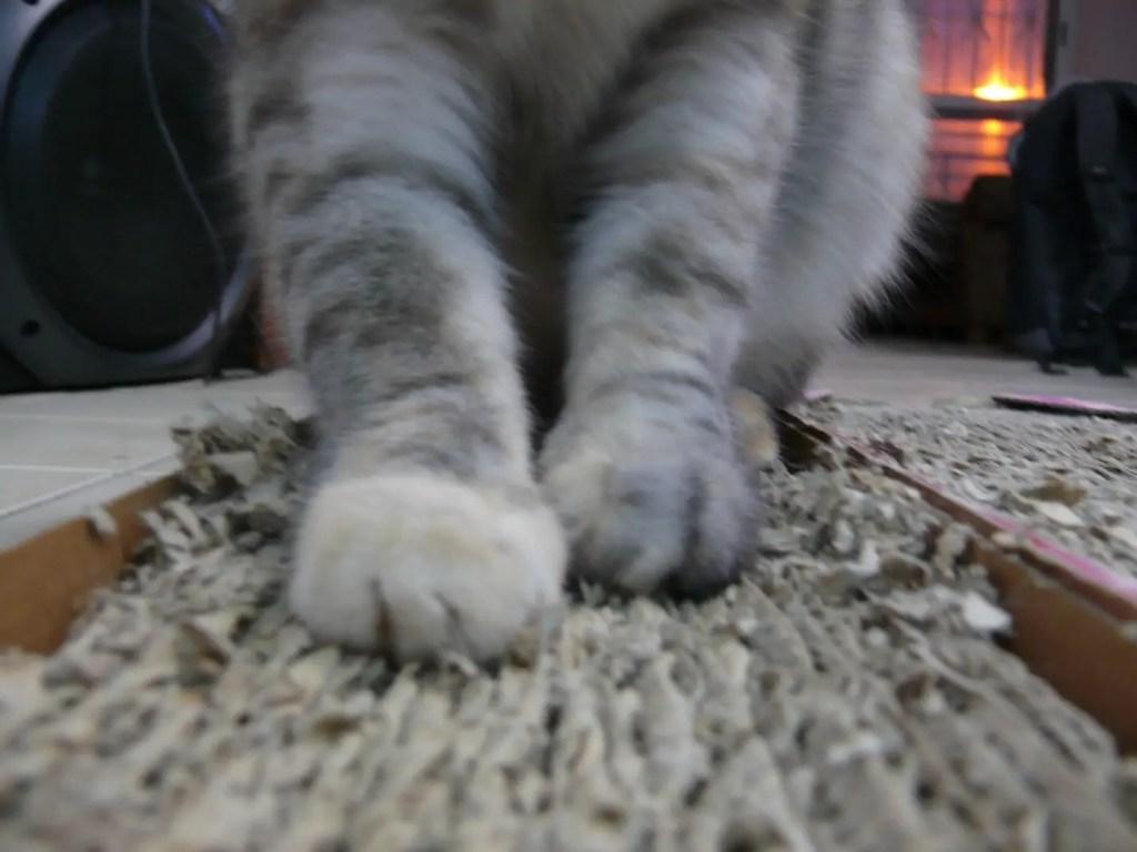 Catit Style Scratcher with Catnip