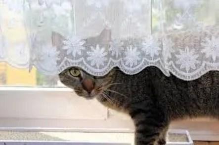 erratic cats
