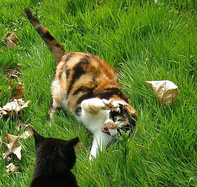 Running Cat