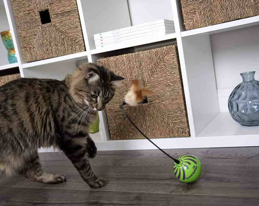 Best Cat Toy