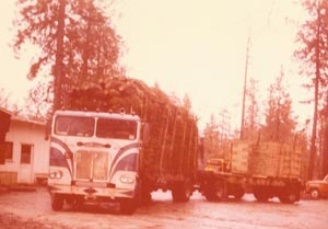 Loading wood stands on a truck of trees, 1973