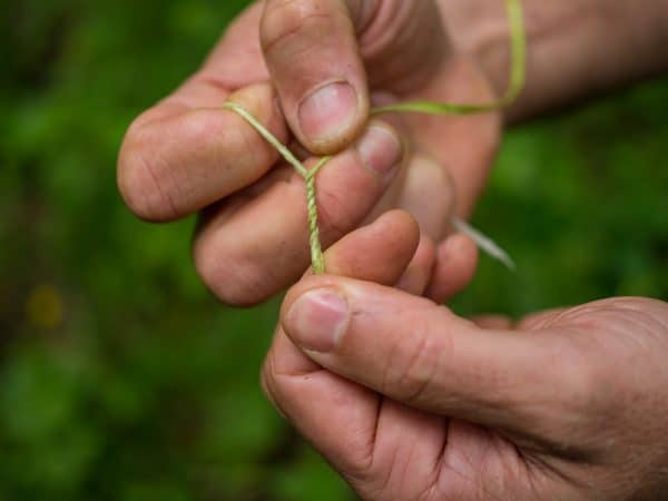 Making Rope from Plants