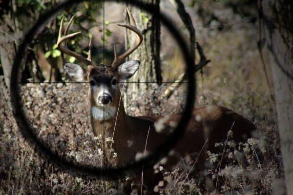 Hunting With Optics