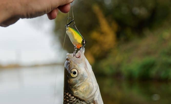 How to Fish Crankbait