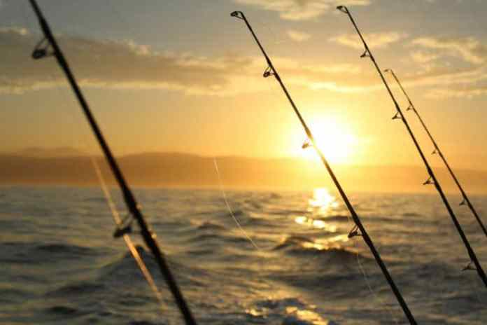 Different Types of Fishing Reels Explained