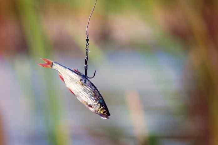 Do Fishing Hooks Dissolve