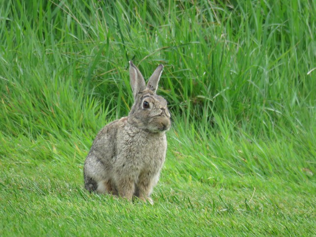 IMG_3257 rabbit