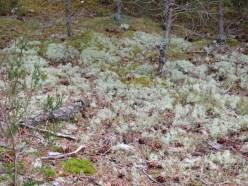 IMG_4411 lichen floor
