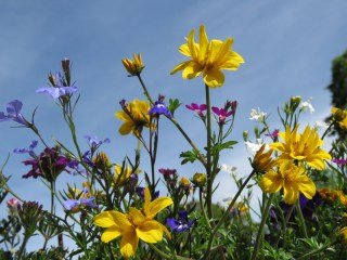 IMG_4872 flowers
