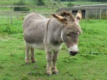 IMG_7548 Donkey