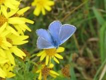 IMG_7874 blue