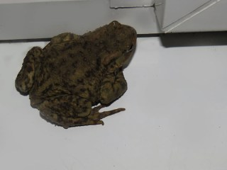 IMG_9126 toad