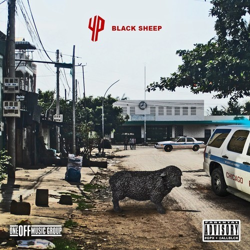 YP Black Sheep