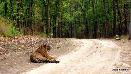 Munna sitting on roadside