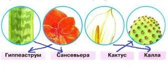 Узнаем растения по фрагментам