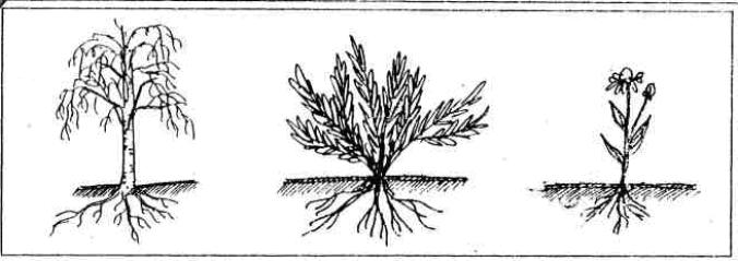 дерево, кустарник, трава схематично