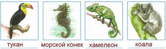 тукан, морской конек, хамелеон, коала