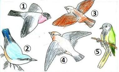 определи и закрась птиц на рисунке