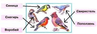 птицы и названия