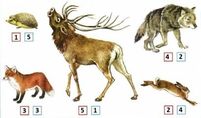 Размеры зверей