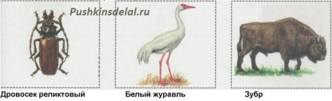 Мудрая Черепаха интересуется, знаешь ли ты животных из Красной книги. Вырежи и наклей рисунки из Приложения. Зубр, дровосек реликтовый, белый журавль