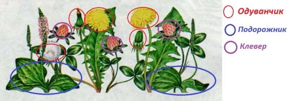 Посчитайте растения на рисунке учебника (с. 72) и запишите результаты.