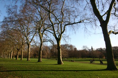 Green Park - the lush lawns of the palace