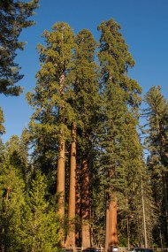 D'autres gros et grands arbres