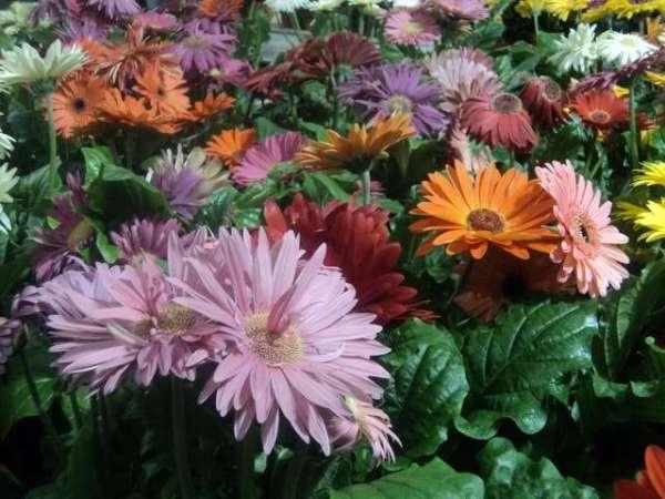 Цветущие комнатные растения фото и названия Комнатные ...