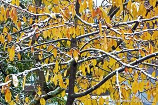 foto-68b-76-wintereinbruch
