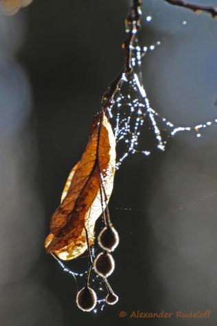 foto-68f-18-frost
