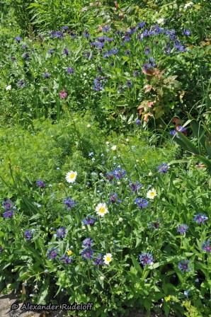 Foto-73d-(55)-Gartenkunst