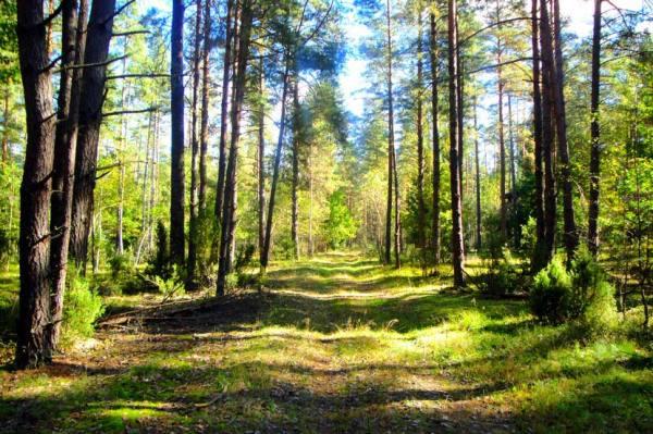 Беловежская Пуща Фото Картинки